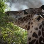 Tanzania_Safari-12