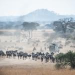 Tanzania_Safari-14