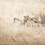 Tanzania_Safari-16