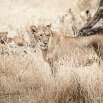 Tanzania_Safari-17