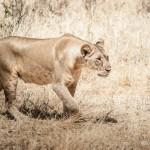 Tanzania_Safari-18
