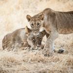 Tanzania_Safari-19