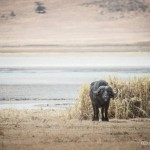 Tanzania_Safari-23