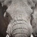 Tanzania_Safari-24