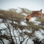 Tanzania_Safari-25