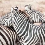 Tanzania_Safari-26