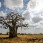 Tanzania_Safari-3