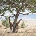 Tanzania_Safari-38
