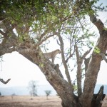 Tanzania_Safari-39