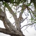 Tanzania_Safari-40