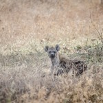 Tanzania_Safari-41