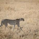 Tanzania_Safari-45