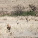 Tanzania_Safari-46