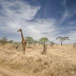 Tanzania_Safari-48