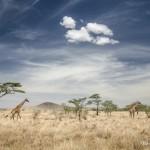 Tanzania_Safari-49
