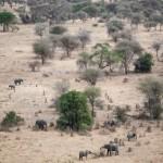Tanzania_Safari-5