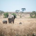 Tanzania_Safari-50
