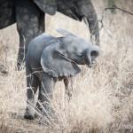 Tanzania_Safari-51