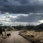 Tanzania_Safari-52