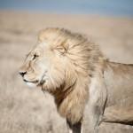 Tanzania_Safari-54