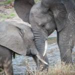 Tanzania_Safari-6