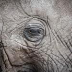 Tanzania_Safari-8