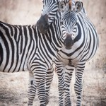 Tanzania_Safari-9